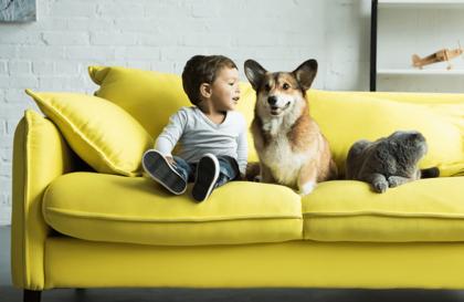 Tout comprendre sur le comportement de votre animal de compagnie