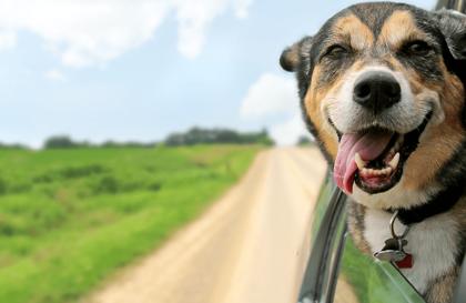 Assurance chien et chat : notre décryptage complet